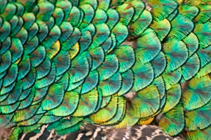Science Solvers: Feathers and Scales